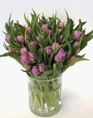 Tulpės (violetinės)
