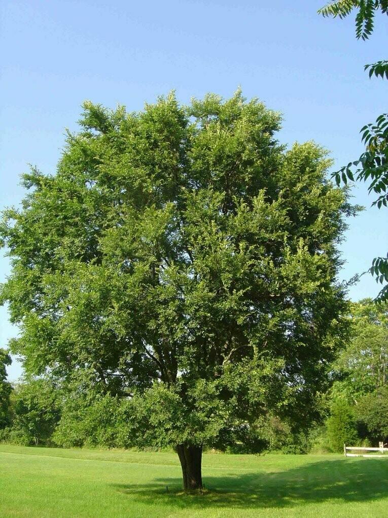 Earth Day: Sponsor a Tree Fundraiser!