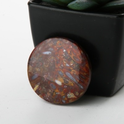 Circular Agatized Red Palm Root Cabochon