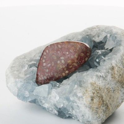 Red Palm Root Cabochon