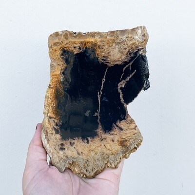 Black Palm Root Slab - 245 grams