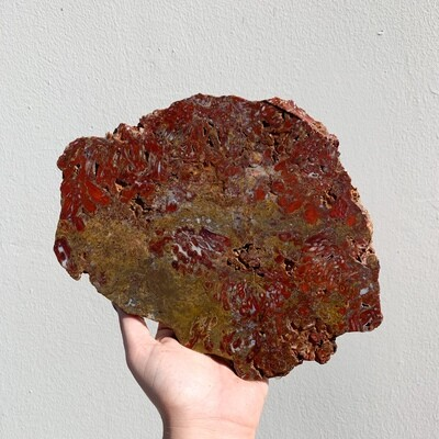 Red Palm Root Slab - 1002 grams