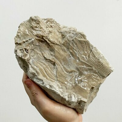 Polish Flint Rough – 7.74 pound piece