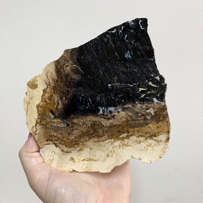 Black Palm Root Slab – 287 grams