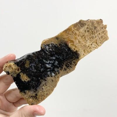 Black Palm Root Slab – 120 grams