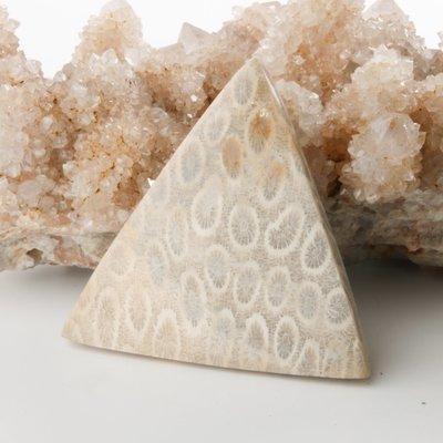 Fossilized Coral Cabochon