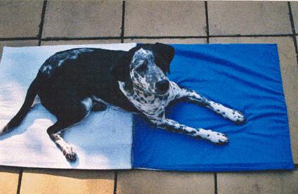 Magnetfeldmatte für Hunde