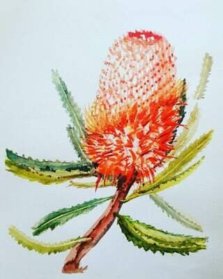 Banksia 4