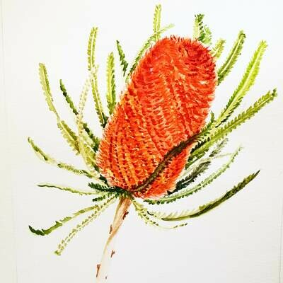 Banksia 2